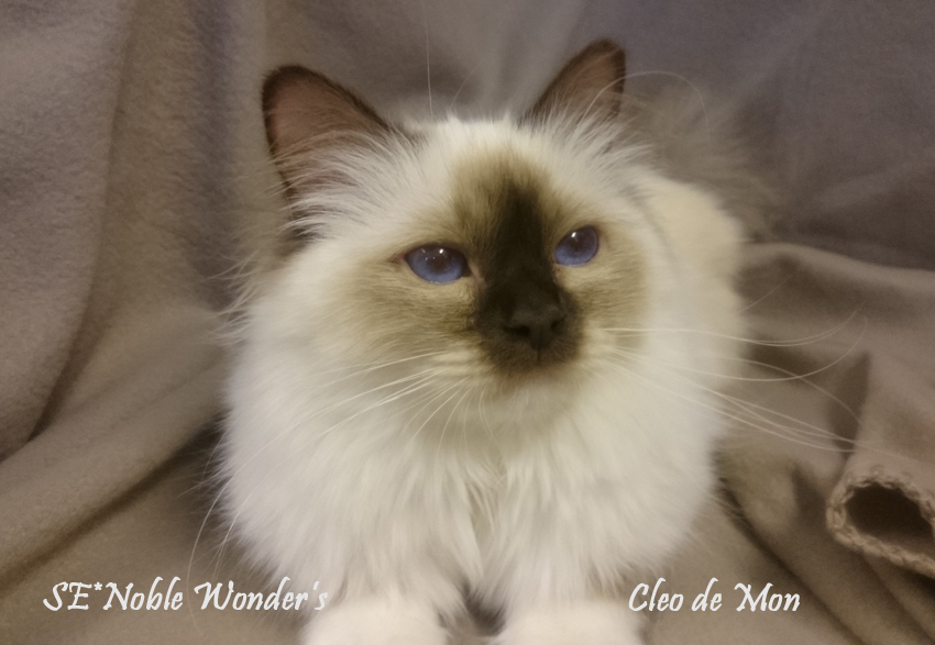 IC SE*Noble Wonder's Cleo de Mon