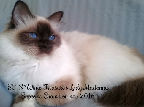 Lady Madonna, Supreme Champion