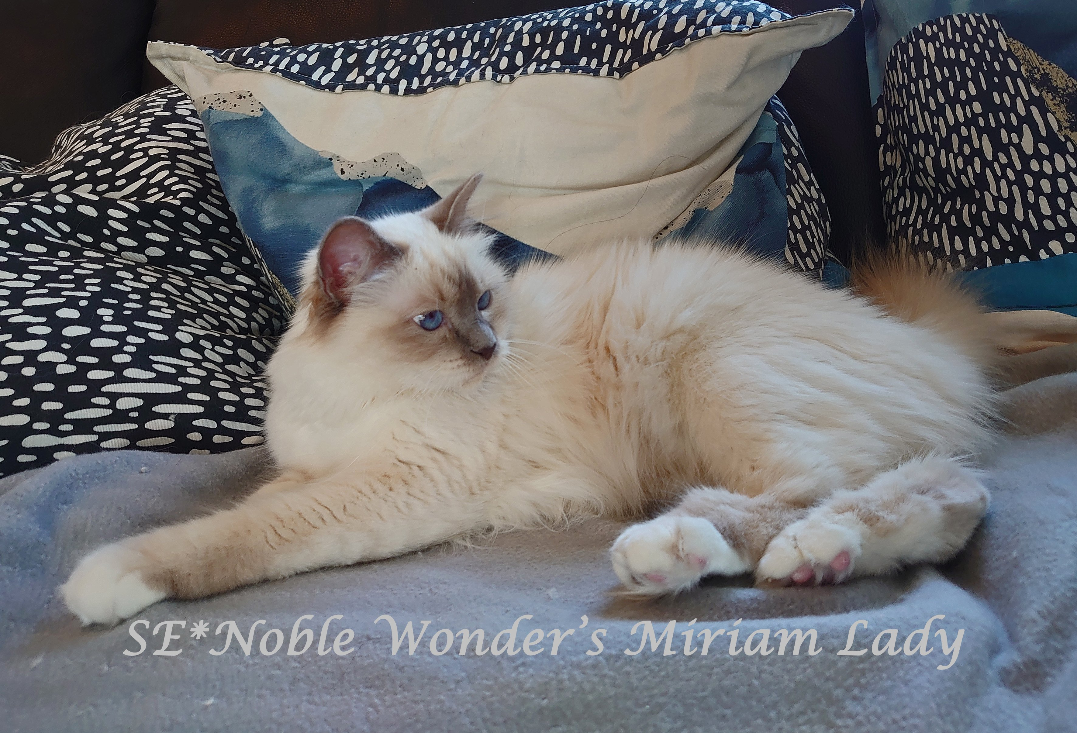 SE*Noble Wonder's Josselyn Lady